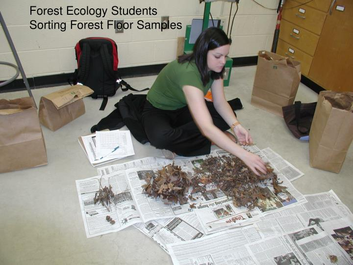 Forest Ecology Students