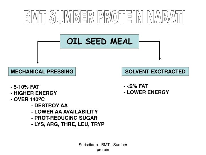 BMT SUMBER PROTEIN NABATI