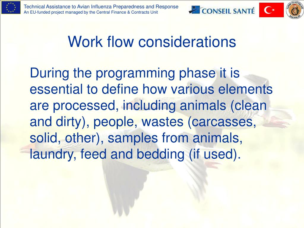 Work flow considerations