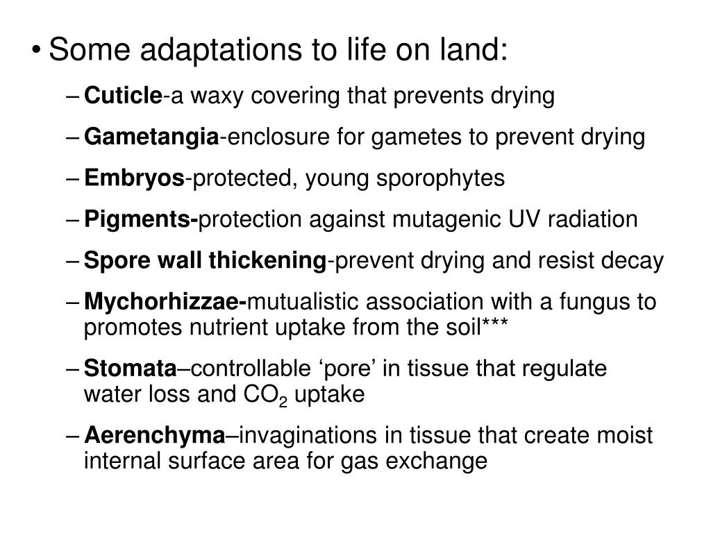 Some adaptations to life on land: