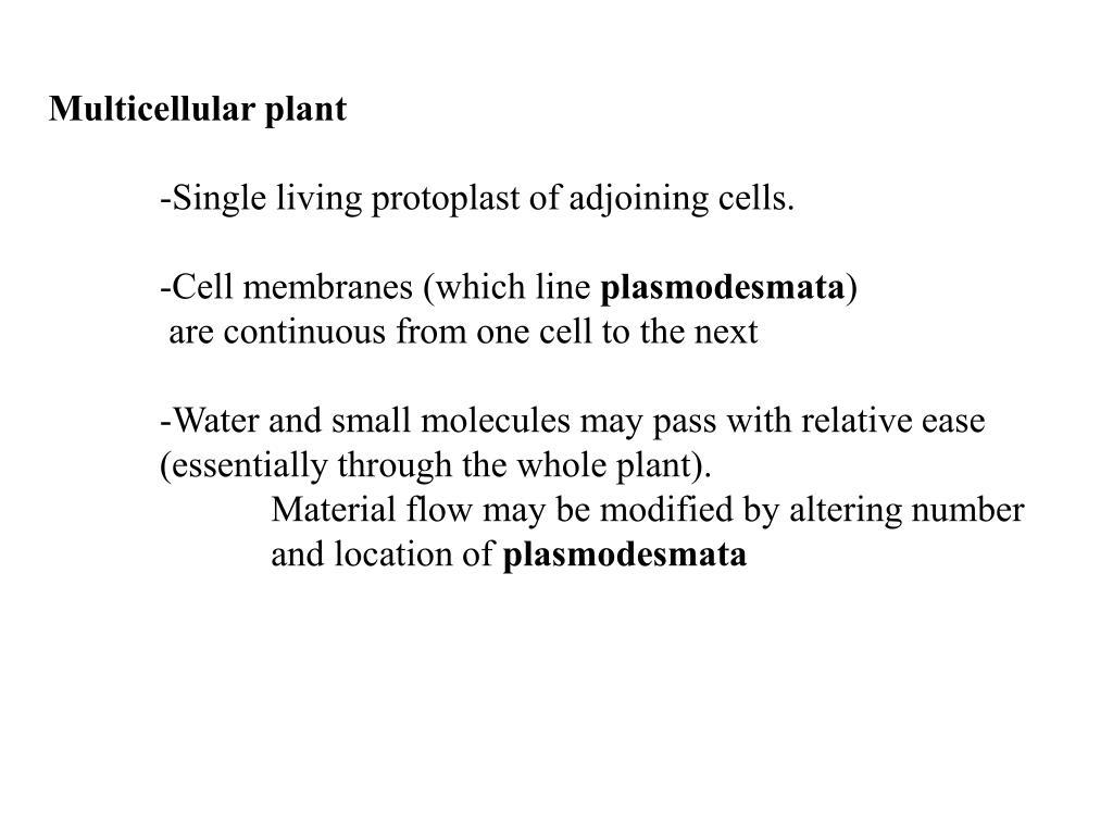 Multicellular plant