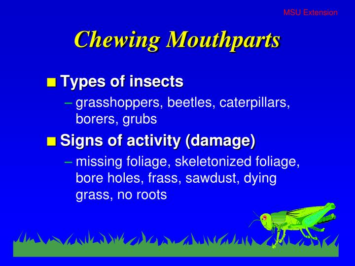 Chewing Mouthparts