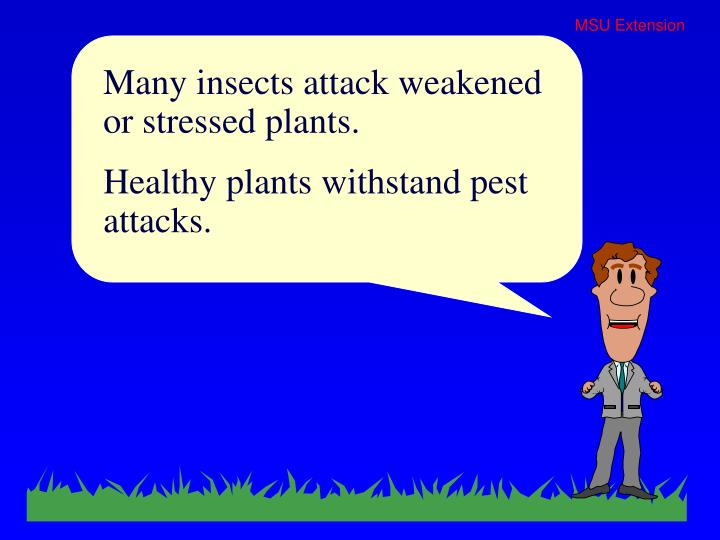 Many insects attack weakened or stressed plants.