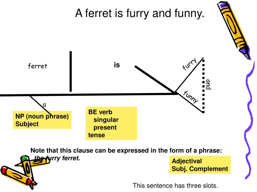 A ferret is furry and funny.