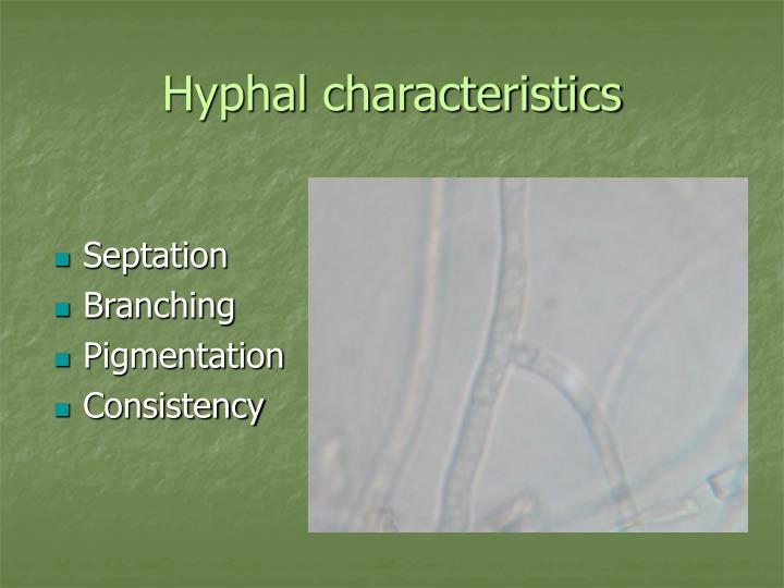 Hyphal characteristics