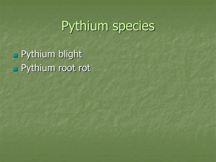 Pythium species