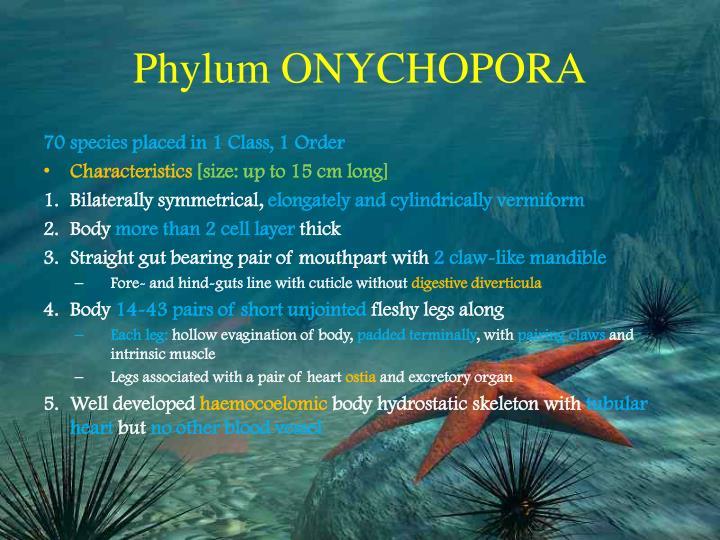 Phylum ONYCHOPORA