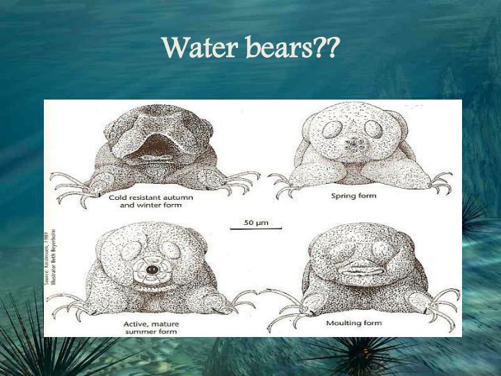 Water bears??