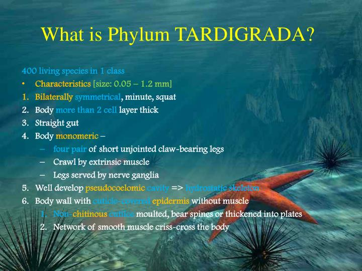 What is Phylum TARDIGRADA?