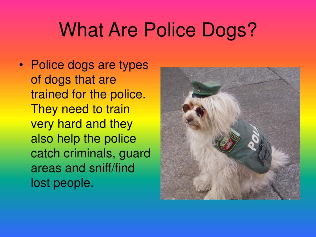 What Are Police Dogs?