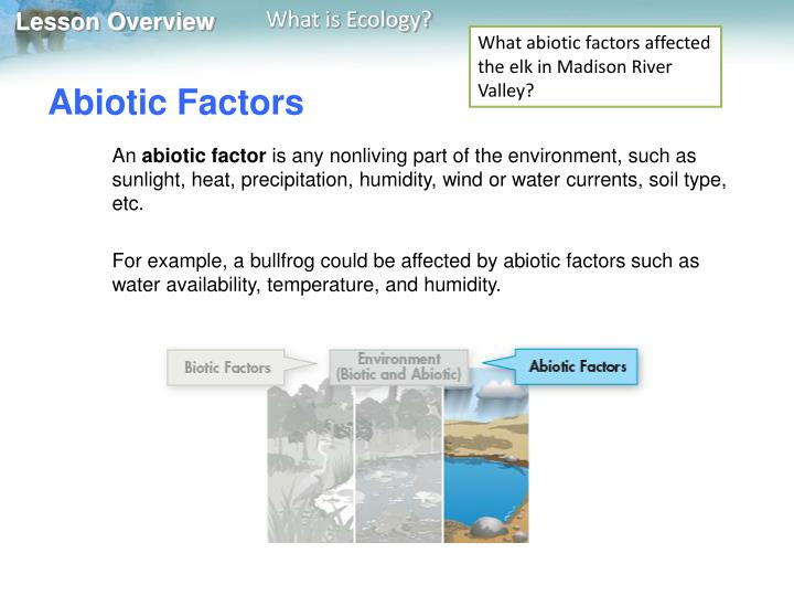 What abiotic factors affected the elk in Madison River Valley?