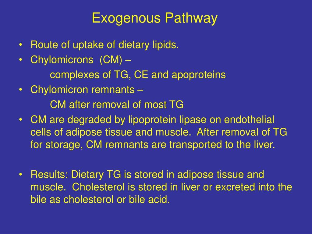 Exogenous Pathway