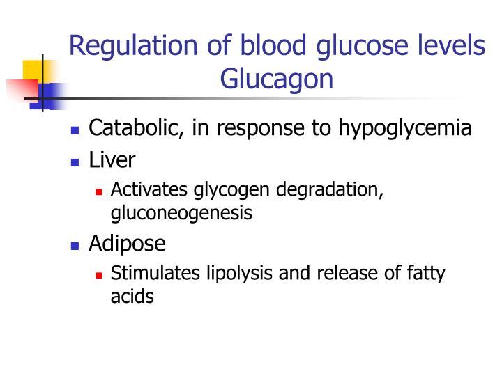 Regulation of blood glucose levels