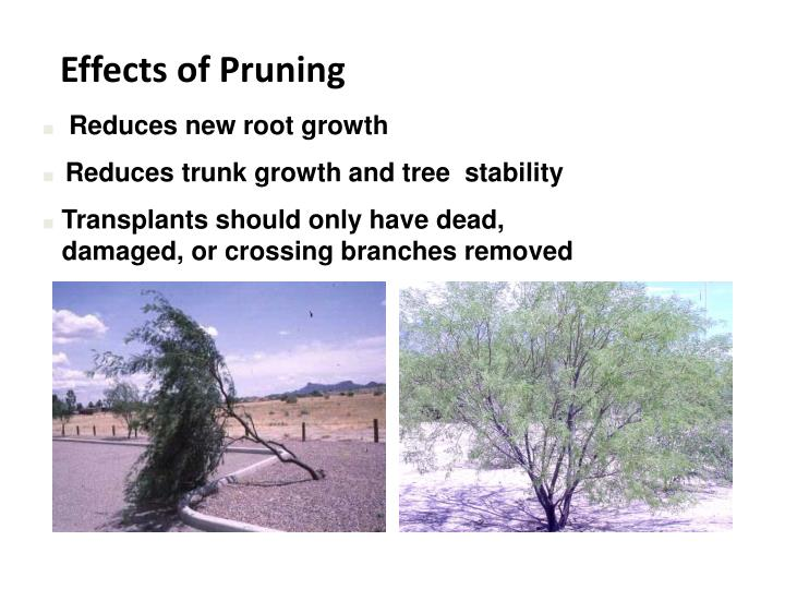 Effects of Pruning