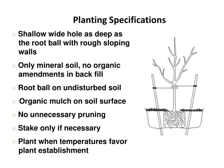 Planting Specifications