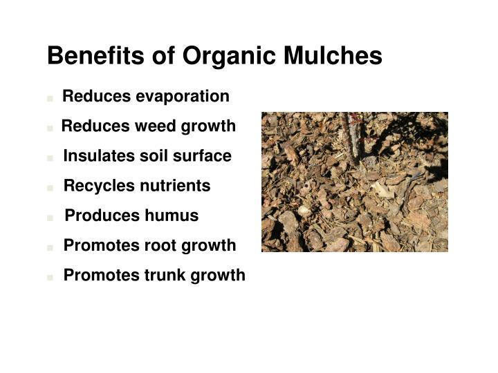 Benefits of Organic Mulches