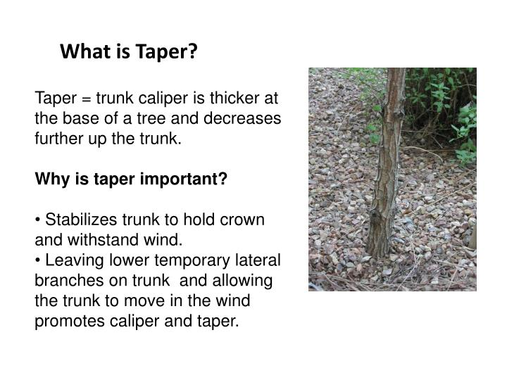 What is Taper?