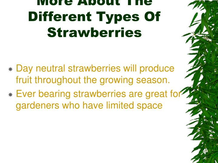 More About The Different Types Of Strawberries