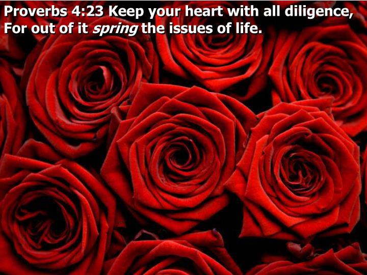 Proverbs 4:23 Keep your heart with all diligence, For out of it