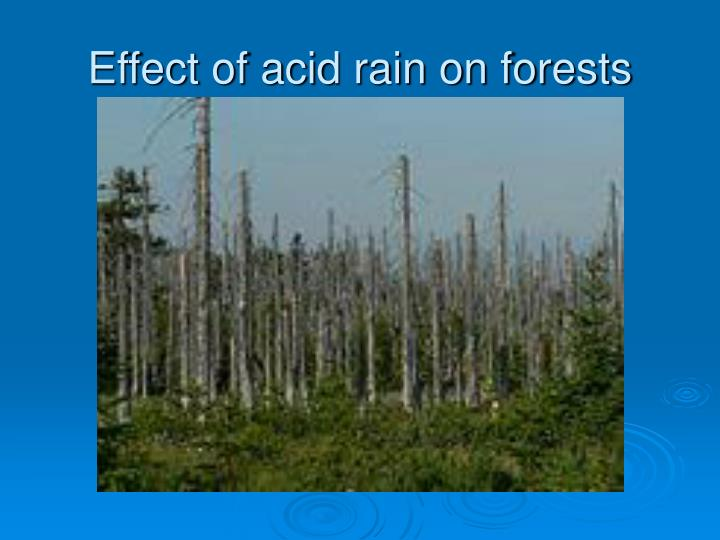 a study of the effects of acid rain on rain forests That's actually the case in a new study on greenhouse gases by nasa scientists  and others the researchers discovered that acid rain inhibits a swampland  bacteria from producing  us epa web site: effects of acid rain on forests.