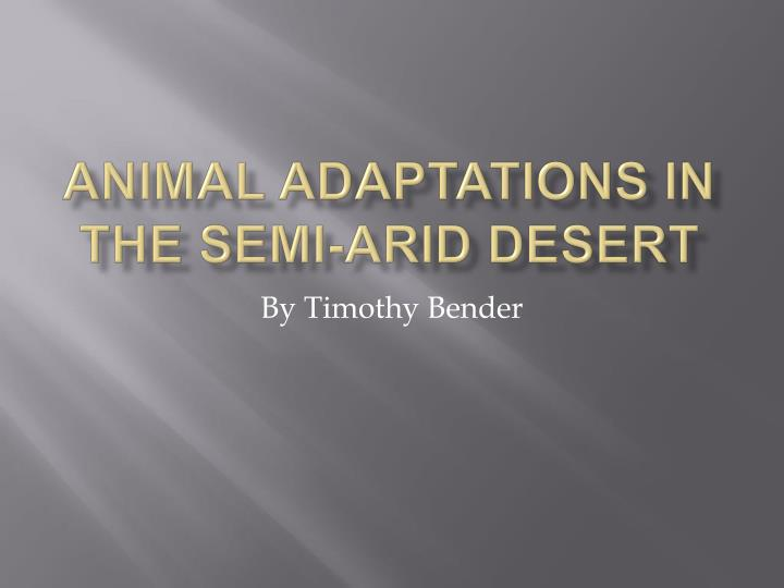 Animal adaptations in the semi arid desert
