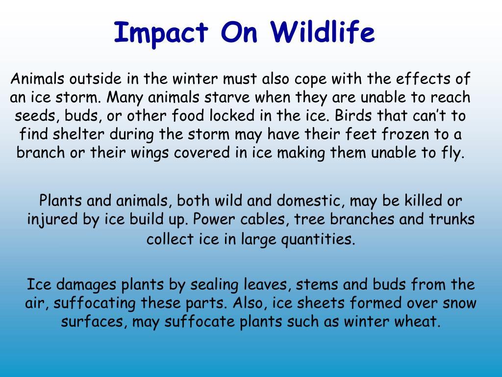 Impact On Wildlife
