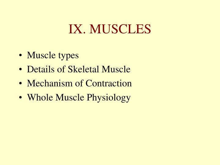 IX. MUSCLES