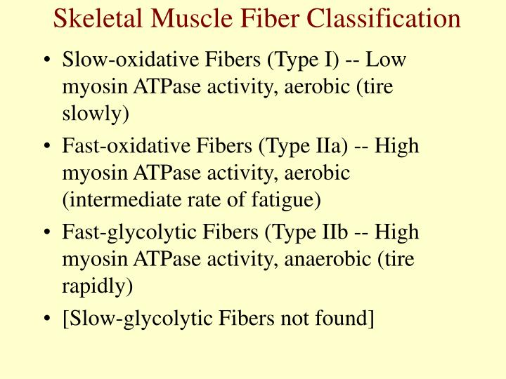 Skeletal Muscle Fiber Classification
