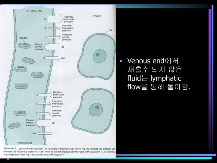 Venous end