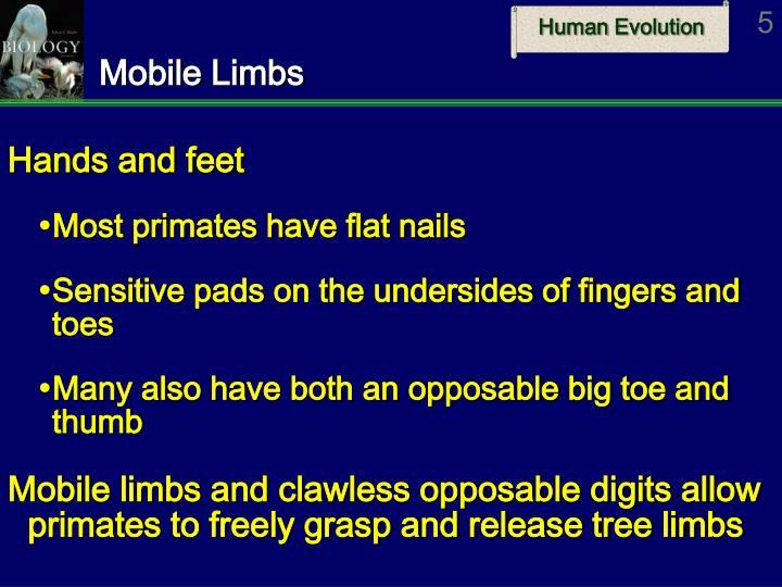 Mobile Limbs