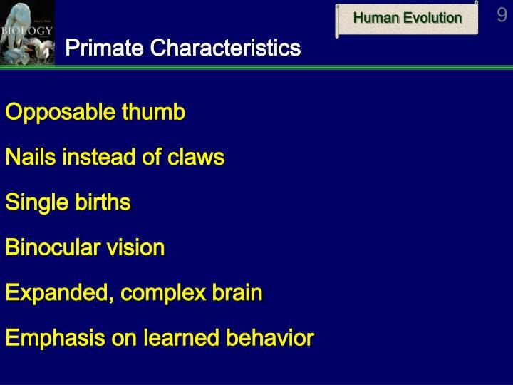 Primate Characteristics