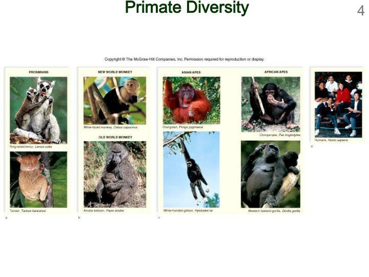 Primate Diversity