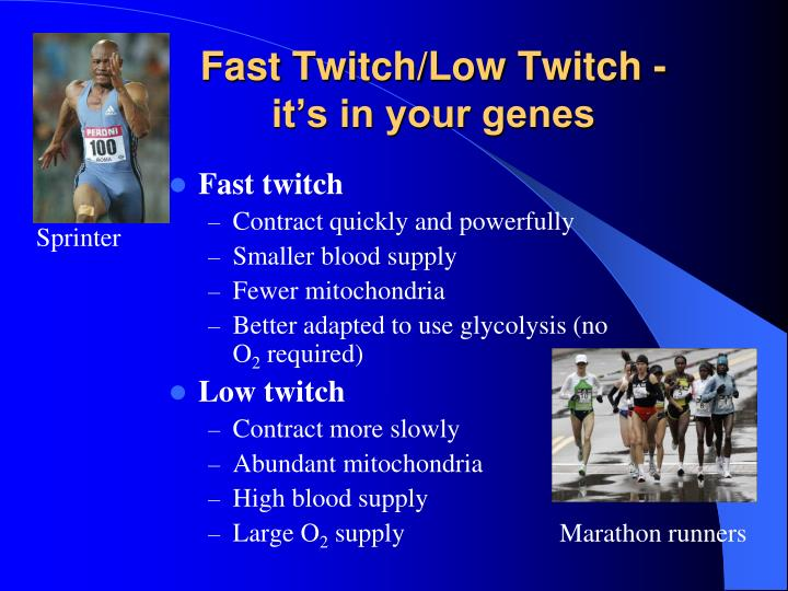 Fast Twitch/Low Twitch -