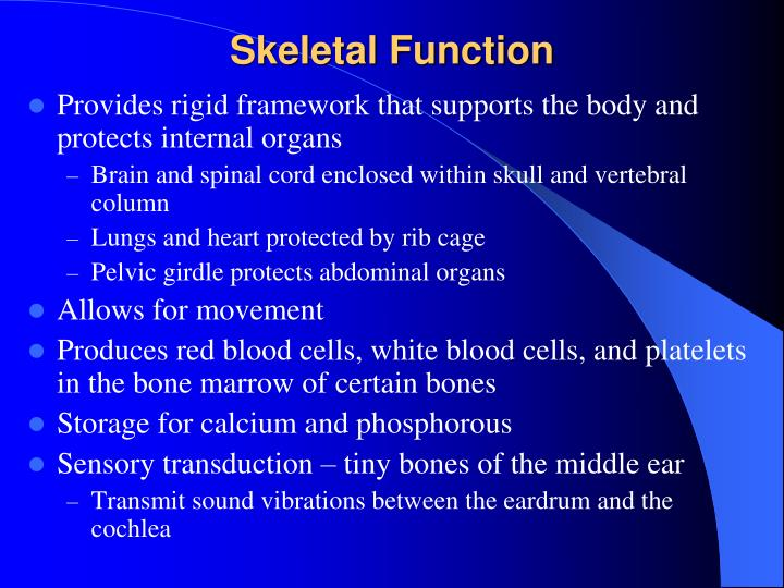 Skeletal Function