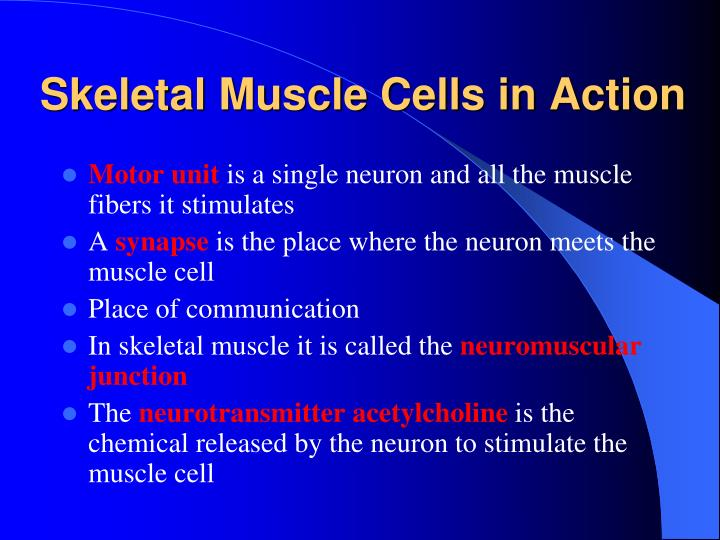 Skeletal Muscle Cells in Action
