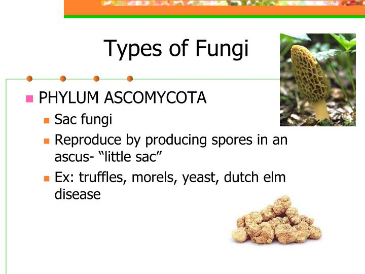 Types of Fungi