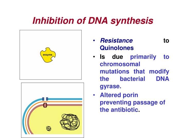 Inhibition of DNA synthesis