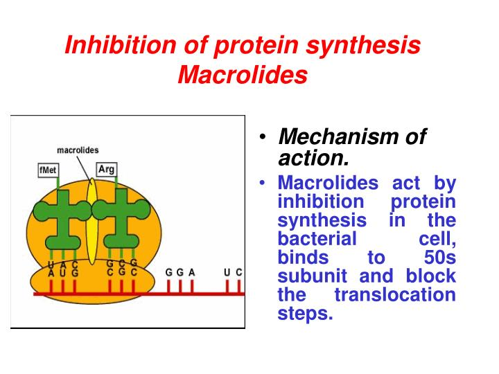 Inhibition of protein synthesis