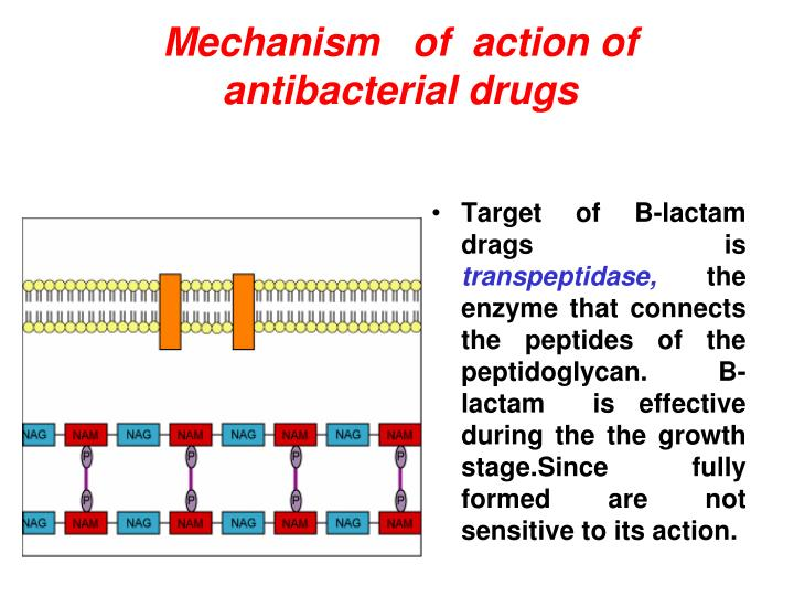 Mechanism   of  action of antibacterial drugs