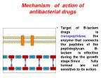 mechanism of action of antibacterial drugs1