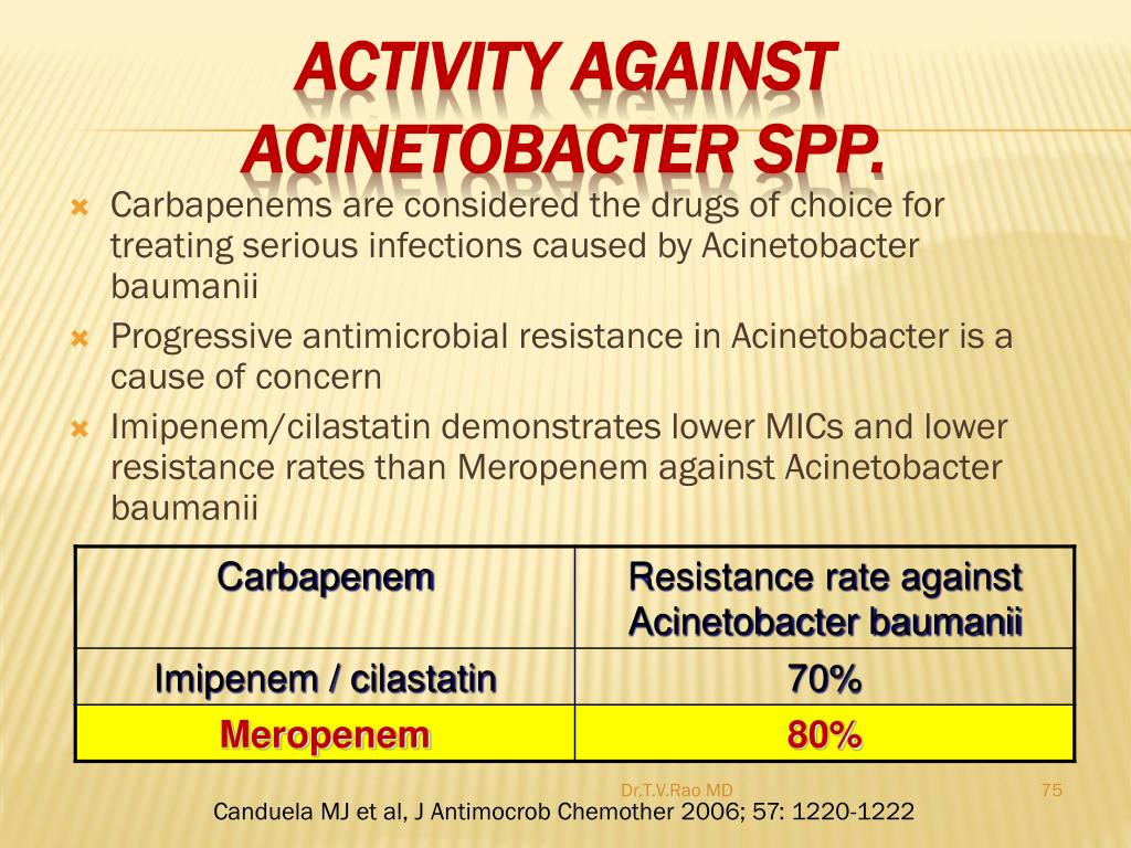Activity against Acinetobacter spp.