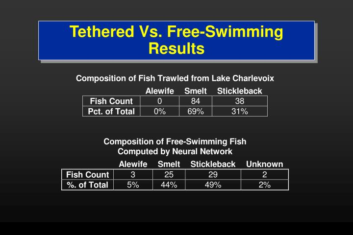 Tethered Vs. Free-Swimming Results