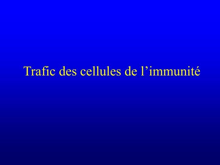 Trafic des cellules de l'immunité