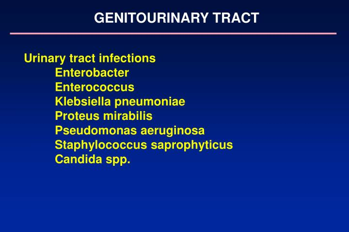 GENITOURINARY TRACT
