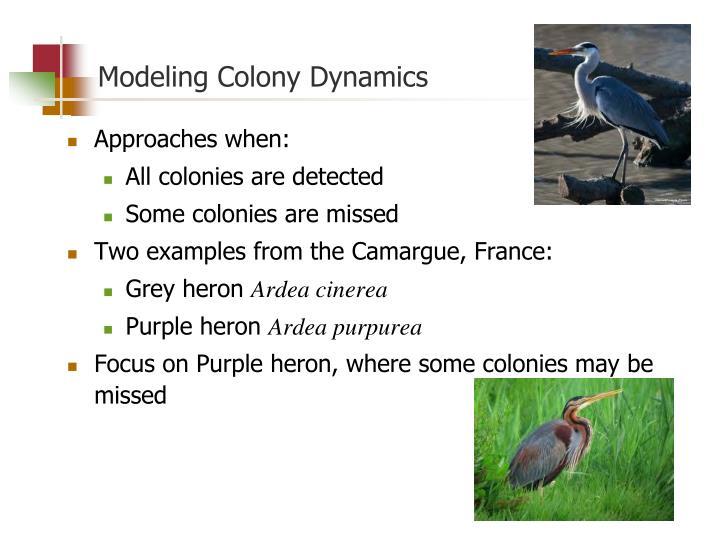 Modeling Colony Dynamics