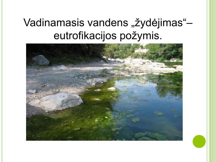 """Vadinamasis vandens """"žydėjimas""""– eutrofikacijos požymis."""