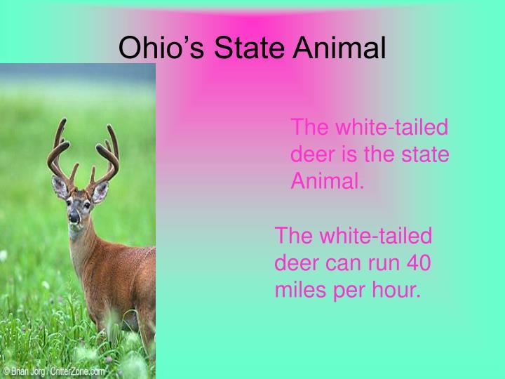 Ohio's State Animal