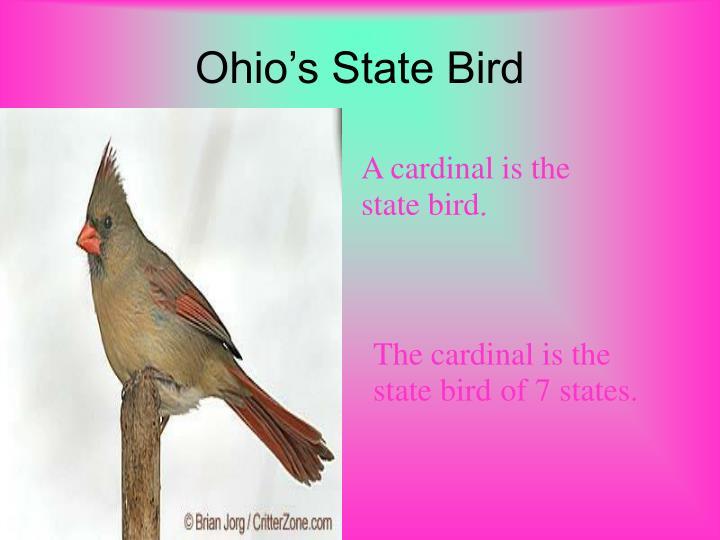 Ohio's State Bird