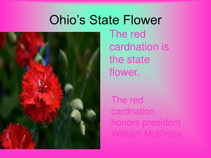 Ohio's State Flower