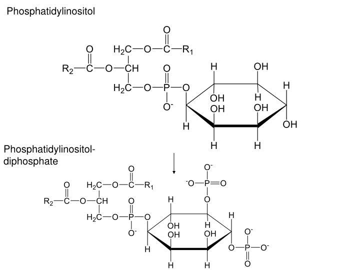 Phosphatidylinositol